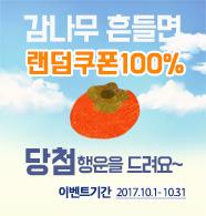 10월 감나무 이벤트