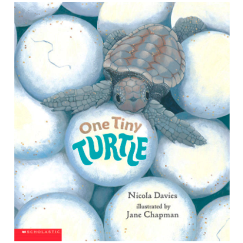 <span>[P]</span> One Tiny Turtle  <span>[Scholastic]<...